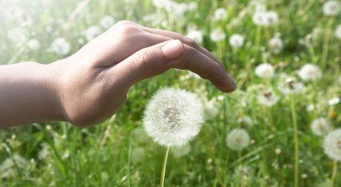 Wiese, Pusteblume, schützende Hand, Symbolbild Schutz, Verantwortung